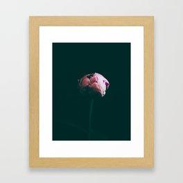 Raspberry Peony Framed Art Print