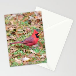 Autumn Leaves Cardinal Stationery Cards