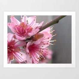 Cocktail Tree Flower Art Print