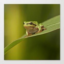 Frog's life Canvas Print