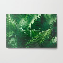 Macro photography of a fern in a tropical forest. Nature background. Metal Print