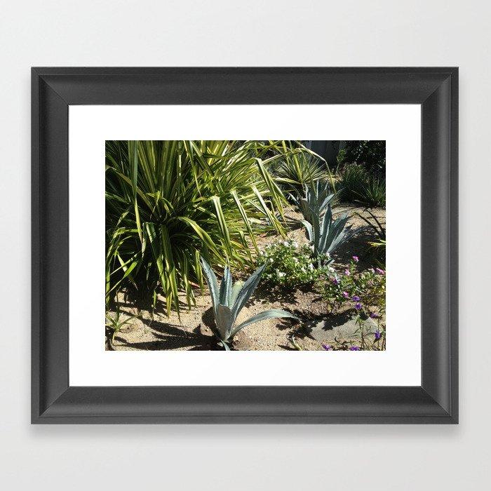 Cooper Island: Cooper Island, Brittish Virgin Islands, Tropical Plants