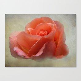 Romantic Peachy Rose Floral Canvas Print