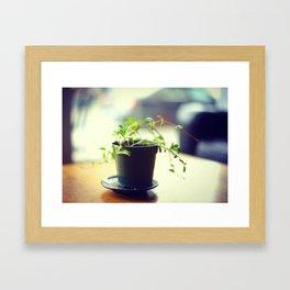 A Pot of Green Framed Art Print
