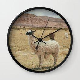 Lama Pampa bolivie Wall Clock