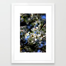 Springtime Blossoms Framed Art Print