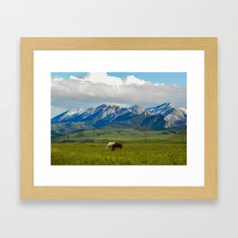 Horses of the Misson Creek Ranch Graze Framed Art Print