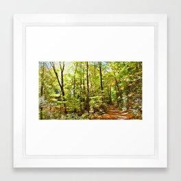 Sunlit Forest in Autumn Framed Art Print