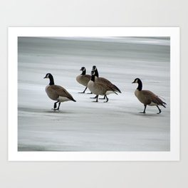 Graceful Geese Art Print
