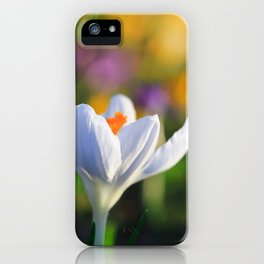 Colorful Crocuses in Spring iPhone Case