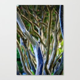 Crepe Myrtle Tree Branches Canvas Print