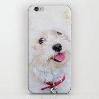 shih tzu iPhone & iPod Skins featuring Emma - Bichon Frise / Shih Tzu by Alaina Abplanalp
