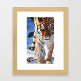 Tiger Strut Framed Art Print