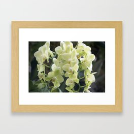 Longwood Gardens Orchid Extravaganza 69 Framed Art Print