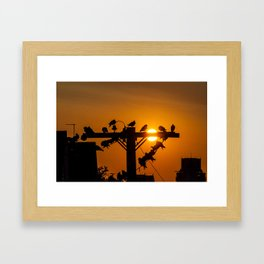 Pigeon Sunrise Framed Art Print