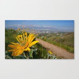 Sun Flower Looking On Canvas Print