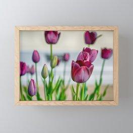 Steckborn Tulips Framed Mini Art Print