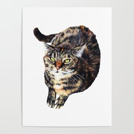 Kitty Cat Chili Poster