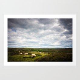 Sheep grazing in North Yorkshire Art Print
