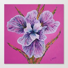 On Persian Pink Canvas Print