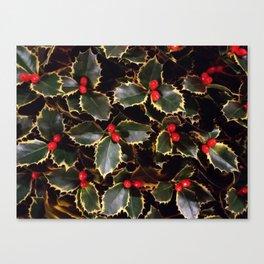 Ilex aquifolium Canvas Print