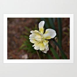 Lovely Spring Daffodil Art Print