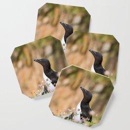 Razorbills - Ireland (RR 283) Coaster
