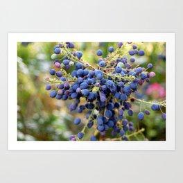Blue Berries in Monet's Garden  Art Print