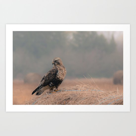 Feathered Wanderer Art Print
