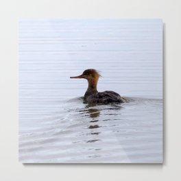 Watercolor Bird, Common Merganser 07, Mjoifjordur, Iceland Metal Print