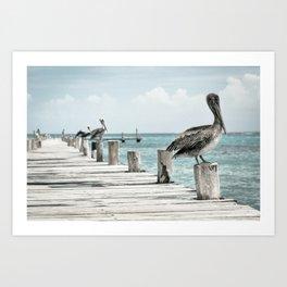 Pelican Water Bird PelecanusPelican Water Bird Pelecanus Art Print