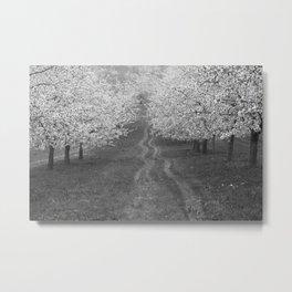 Cherry Trees Metal Print