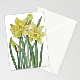 Watercolor Daffodils Botanical Illustration Stationery Cards