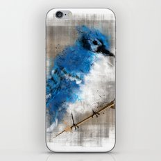 A Blue Jay Today iPhone & iPod Skin