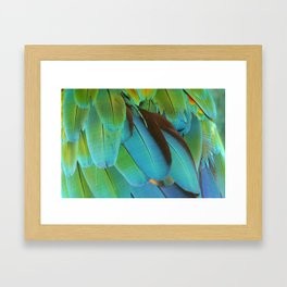 Blue and Green Macaw Feathers Framed Art Print