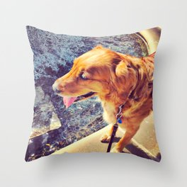 Beautiful dog golden retriever on the swimming pool Throw Pillow