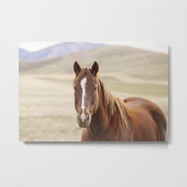 Colorful Western Horse Photo Metal Print