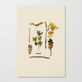 COMPOSIZIONE FOGLIE IV Canvas Print