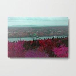 Seal Island - Pink Metal Print