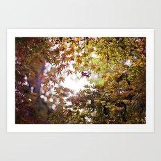 Autumn Light Art Print