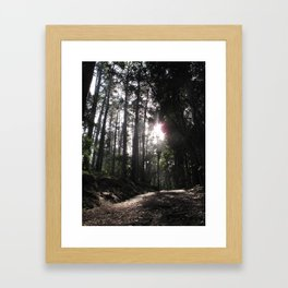 Forest Walks 2 Framed Art Print