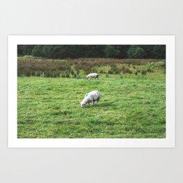 Verdant Pasture Art Print