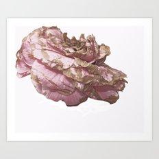 Old Camellia pink Art Print