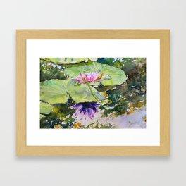Flowering waterlily Framed Art Print