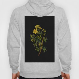 Potentilla Fruticosa Mary Delany Vintage Floral Collage Botanical Flower Hoody