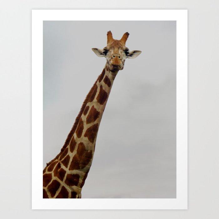 Giraffe Gaze Art Print