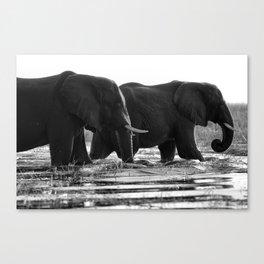 Elephants (Black and White) Canvas Print