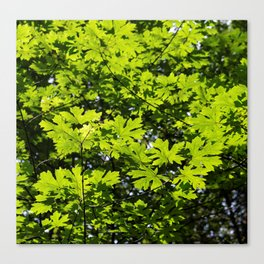Sun-Dappled Forest in the Spring Canvas Print