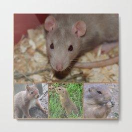 Cute rodents Metal Print