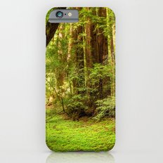 Muir Woods iPhone 6s Slim Case